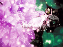 Fairy flower Royalty Free Stock Photography
