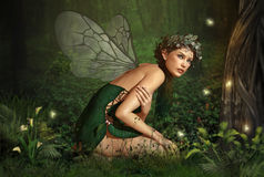 In the Fairy Forest stock illustration