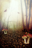 Fairy forest. Red spotted mushrooms in a tale forest,fantasy picture Royalty Free Stock Photos