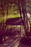 Fairy forest. Arbour in the fairy forest, the sun rays filtering through the trees, twilight Royalty Free Stock Photos