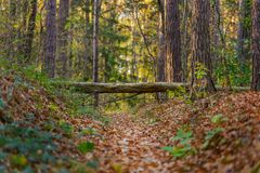 Fairy forest with fallen tree over path Stock Photos