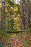 Fairy forest with fallen tree over path Stock Photography