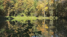 Fairy forest lake. Tranqiul scene of a lake in the forest stock footage