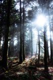 Fairy Forest Stock Images