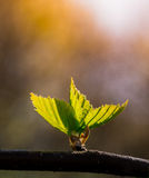 Fairy forest. New leaves on the tree branch Stock Images