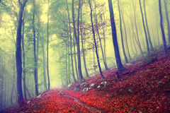 Fairy forest path Stock Image