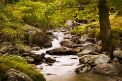 Fairy forest with river Royalty Free Stock Photo