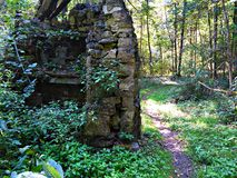 Fairy Forest stock photos