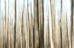 Fairy forest. In summer, vertical blur effect Royalty Free Stock Photos