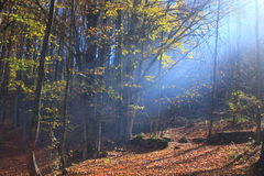 Fairy forest. Fairy-tale forest inspirs autumn colors and scents Stock Photography