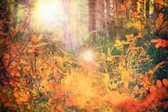 Fairy forest. Textured fairy forest abstract background Stock Photos