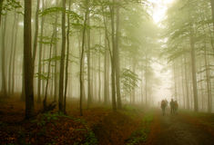 Fairy Forest. Walking people in beech forest royalty free stock photo