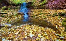 Fairy Glade в лесе осени с водопадом и листовыми золотами ( Стоковые Изображения