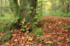Fairy Glen, Rosemarkie, Highlands of Scotland Stock Images