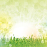 Fairy grass background Royalty Free Stock Photo