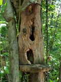 Fairy Home in Tree Hollow. Fairy house created in the hollow of a tree with natural objects stock image