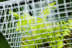 Fairy house garden decoration hanging wire cage, moss, mushroom, snail. Fern Stock Photos