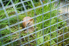Fairy house garden decoration hanging wire cage, moss, mushroom, snail. Fern Stock Image