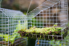 Fairy house garden decoration hanging wire cage, moss, mushroom, snail. Fern Royalty Free Stock Photo