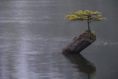 Fairy Lake tree of Life Royalty Free Stock Photos