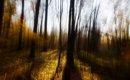 Free Fairy Land Stock Photography - 8460742