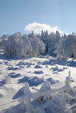 Fairy landscape. Trees and snowy fields under a blue sky Royalty Free Stock Photography