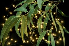 Fairy Lights and Gum Tree Leaves. On Black Background royalty free stock image