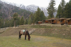 Fairy Meadows is the place to see Nanga Parbat, Pakistan. Stock Photo