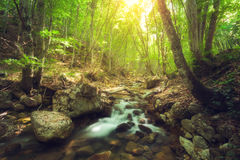Fairy mountain forest at the river. With colorful sun rays in spring morning. Fantastic landscape with trees, green leaves, stones and blurred water at sunrise royalty free stock photos