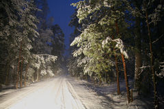 Fairy path in the winter forest Stock Photography