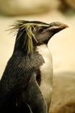 Fairy Penguins Stock Image