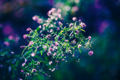 Fairy pink white small flowers on colorful dreamy magic green blue purple blurry background Royalty Free Stock Photography
