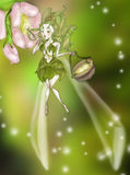 Fairy pollen. Cute fairy pollen a flower for spring Stock Image