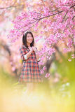 Fairy portrait young girl teen in plaid. Spring day, blooming cherry forest,Chiangmai, north of thailand Royalty Free Stock Photo