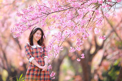 Fairy portrait young girl teen in plaid. Spring day, blooming cherry forest,Chiangmai, north of thailand Royalty Free Stock Photos
