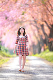 Fairy portrait young girl teen in plaid. Spring day, blooming cherry forest,Chiangmai, north of thailand Royalty Free Stock Photography