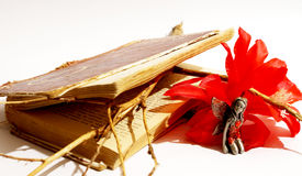 Fairy, red flower blossom, old book Royalty Free Stock Photography