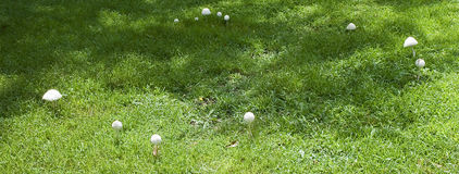 Fairy Ring Stock Images