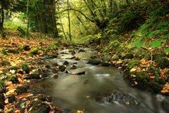 fairy rosemarkie Шотландия гористых местностей распадка Стоковые Фото