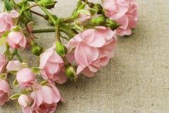 Fairy roses on canvas stock photos