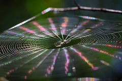 Fairy. Spider creates a web. A ray of sunshine on the web creates a rainbow of colors. It's a miracle takes a few seconds. With different beam tilt sun gets Royalty Free Stock Photo