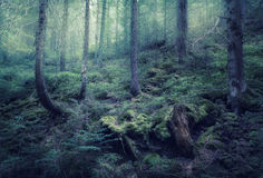 Fairy spring forest with green fog in the morning Royalty Free Stock Images