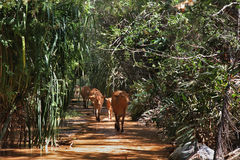 Fairy Stream - Red Canyon between Phan Thiet and Mui Ne. Vietnam Stock Images