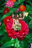 Fairy sulla dalia Fotografie Stock Libere da Diritti