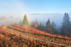 Fairy sunrise in the mountain forest landscape in the morning. The fog over the majestic pine forest. Carpathian. Ukraine, Europe. Beauty world Royalty Free Stock Photography