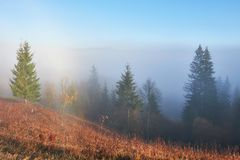 Fairy sunrise in the mountain forest landscape in the morning. The fog over the majestic pine forest. Carpathian. Ukraine, Europe. Beauty world Stock Photography
