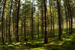 Fairy-tail forest Stock Photos