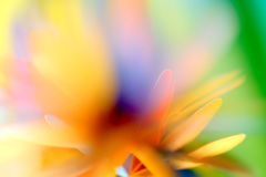 Fairy tale abstract. Colorful paper abstract in lovely, bright colors with blur effect Royalty Free Stock Image