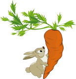 Fairy tale about a bunny. And very big carrot Stock Photos