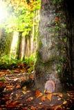 Fairy tale door. Beautiful little fairy door in the tree Royalty Free Stock Image